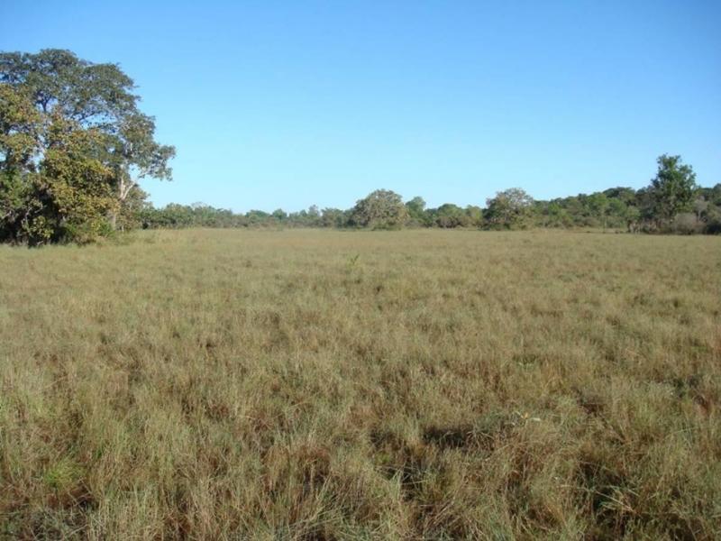 Fazenda  Lucas do Rio Verde  - MT
