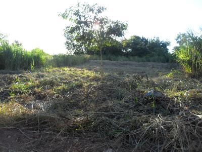 Terreno  no Dom Bosco, Cuiabá  - MT