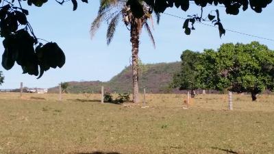 Fazenda  Pedra Preta  - MT
