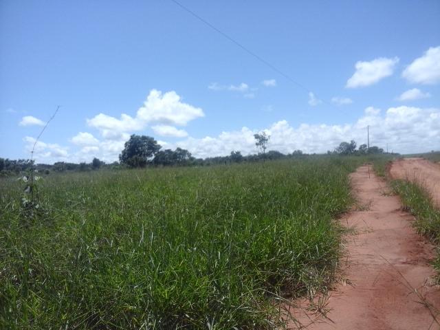 Fazenda  Nova Ubirata  - MT