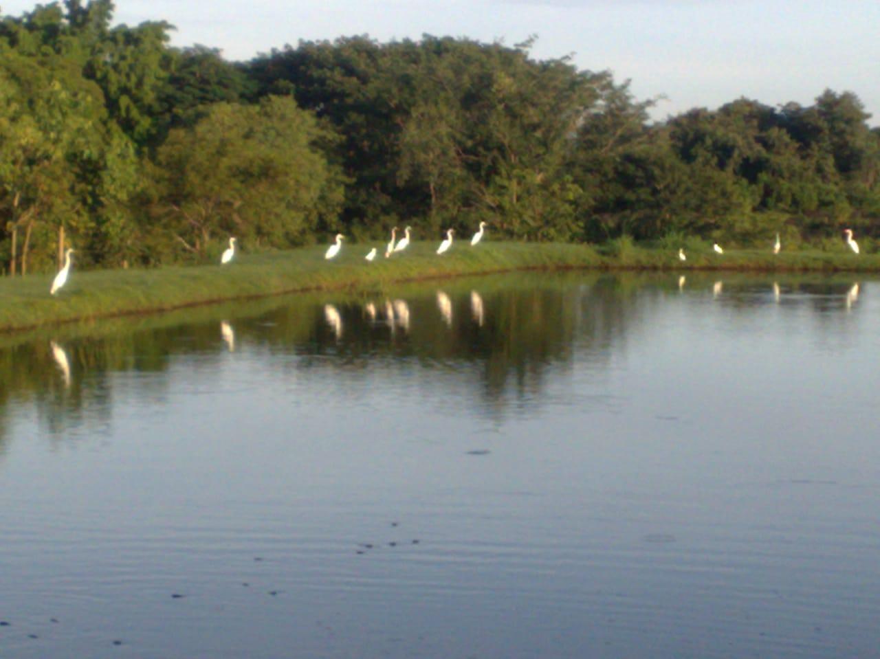 Chácara Sítio  com 6 quartos sendo 2 Suítes no Parque Atalaia, Cuiabá  - MT